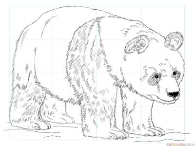 Cum sa desenezi un urs panda